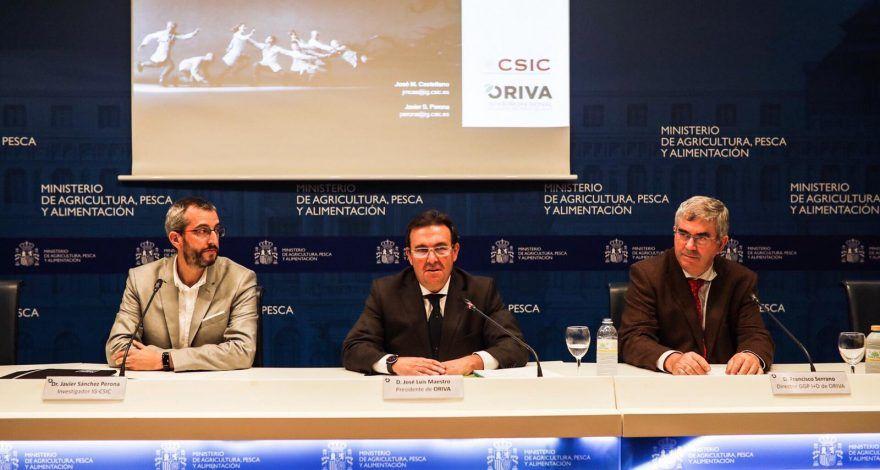 El CSIC abre una nueva vía para la prevención del alzhéimer a través del Aceite de Orujo de Oliva